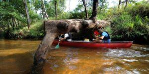 Bordeaux Expats - Canoe