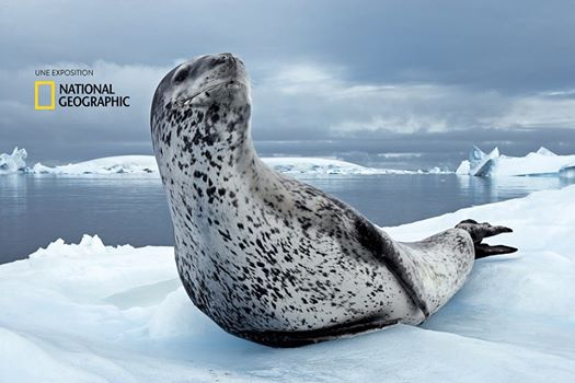 LE MUSÉE MER MARINE OUVRE SON EXPOSITION AVEC NATIONAL GEOGRAPHIC